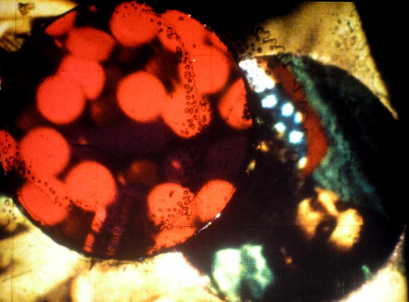 Liz Rosenfeld, Queer Ecologies - LUX Scotland
